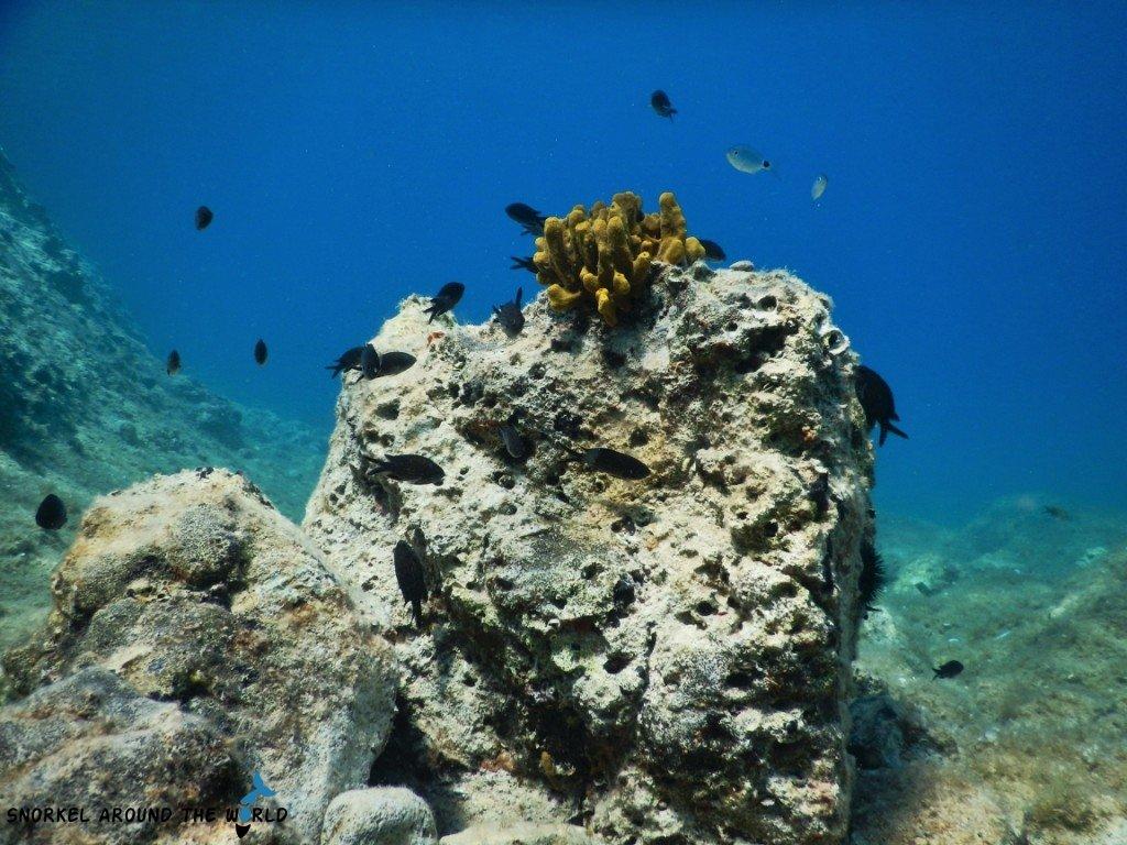 Corals in the sea Croatia