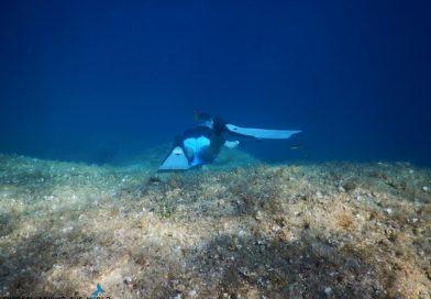 Croatia Krk Marak snorkel