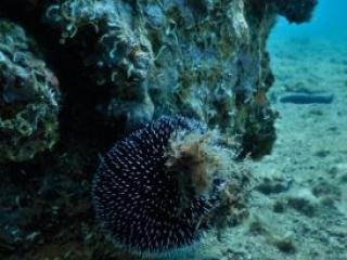 Croatia snorkel holiday