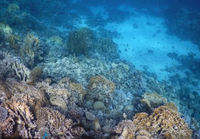 Dahab - Sinai snorkelling