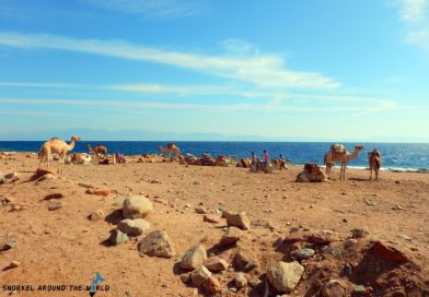 Dahab Blue Hole - Camels in the desert