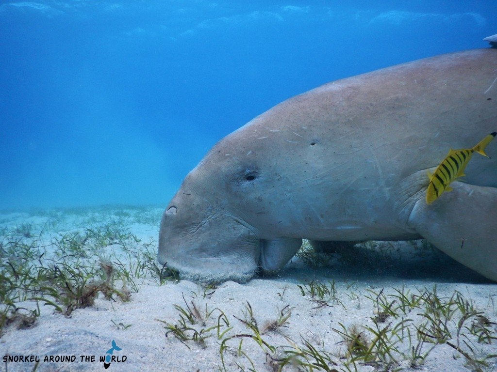 Dugong Three Corners Fayrouz Hotel