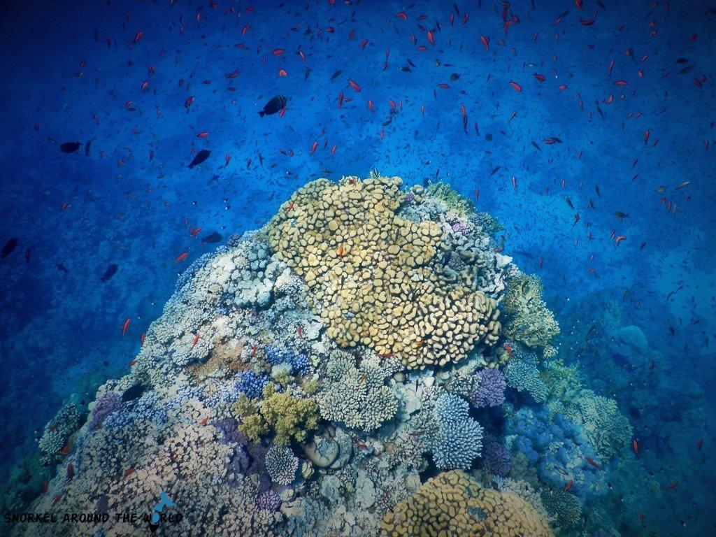 Egypt Coral Reef million fish