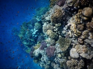 Egypt Red Sea best house reef