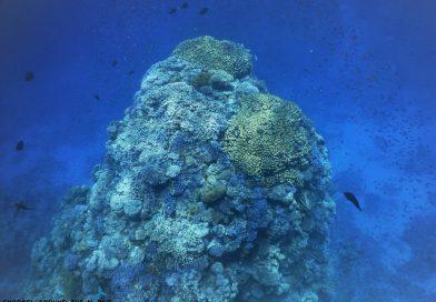 Egypt Sharm el Sheikh coral reef