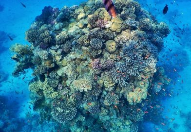 Egypt coral hope spot