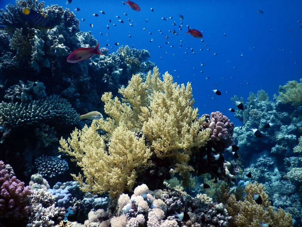 Egypt Red Sea Snorkeling