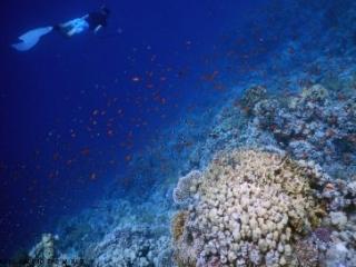 Sharm El Sheikh Ras Nasrani Snorkel Around The World