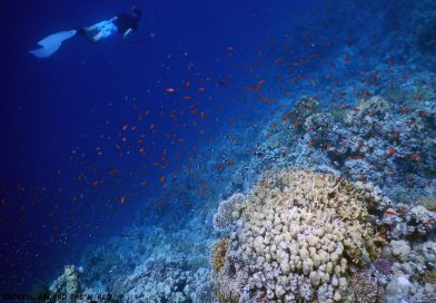 Egypt Sharm-el-Sheikh - Best Coral Reefs Snorkeling