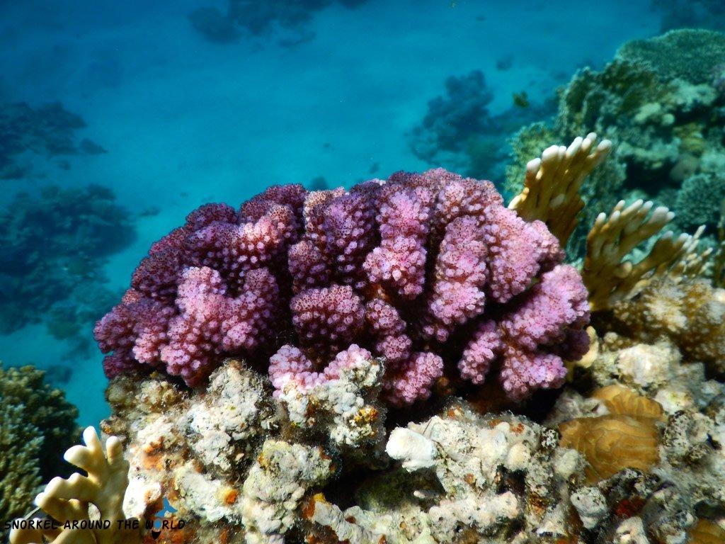 Egypt best snorkeling places
