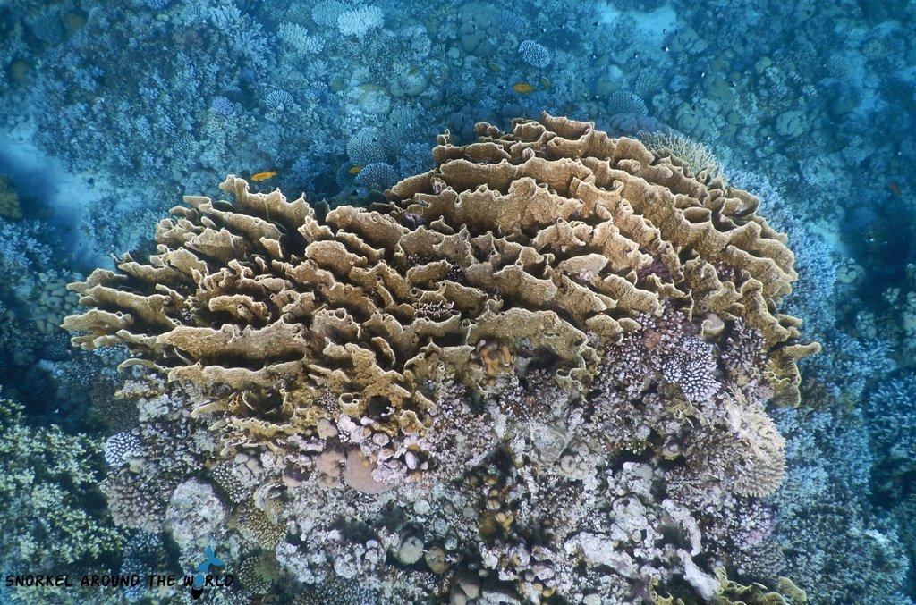 El Nino did not hit the Red Sea