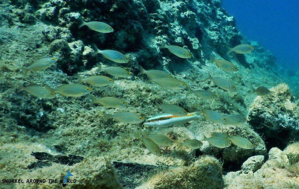Fish in Adriatic Sea