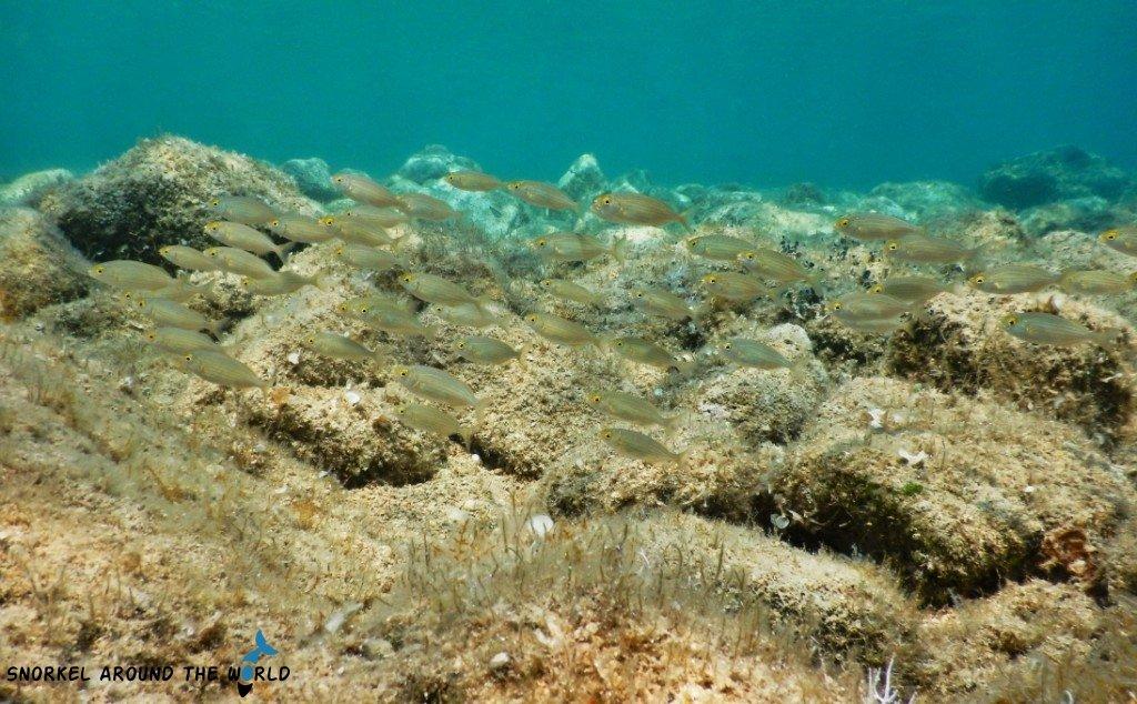 Fish in Croatia