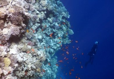 Free Diving Red Sea