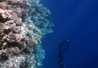 Frei tauchen - Free dive Dahab