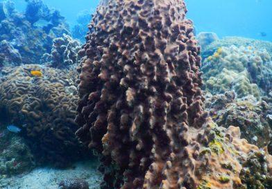 Hing Wong Bay Thailand