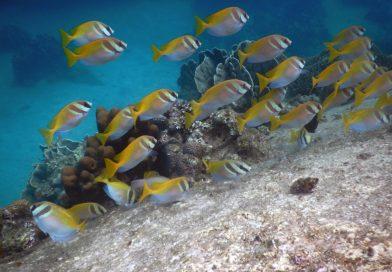 Hing Wong Bay Underwater