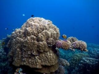 Interesting coral - Red Sea Ras Ghamila