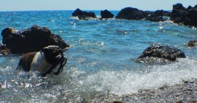 Krk dog friendly beach