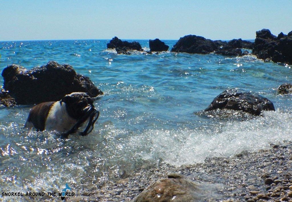 Krk dog friendly beach