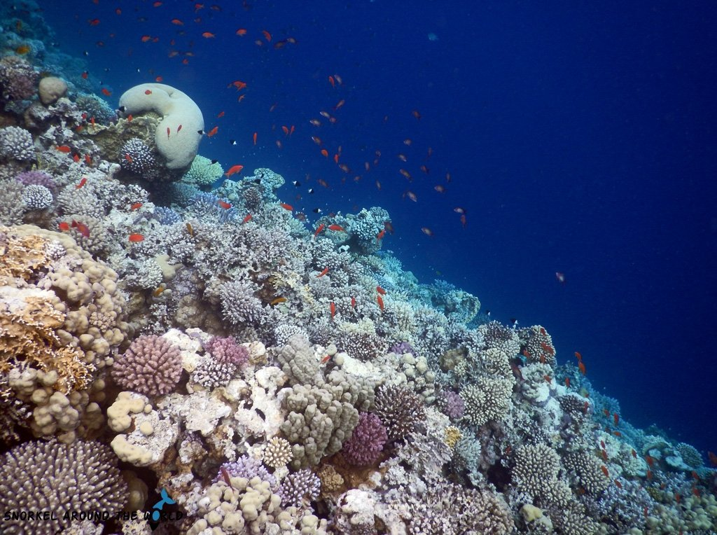 Live Coral in Egypt