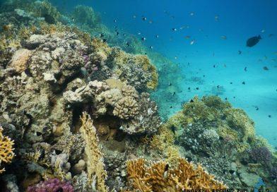 Marsa Alam Abu Dabbab - Leftside coral garden