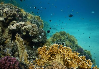Marsa Alam Abu Dabbab - Leftside coral reef
