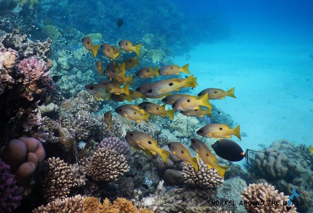 Marsa Alam Abu Dabbab - Leftside fish group