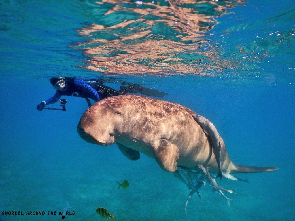 Marsa Alam - Dugong snorkeling