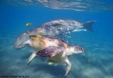 Marsa Mubarak - Dugong and turtle