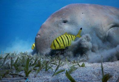 Marsa Mubarak - Snorkeling