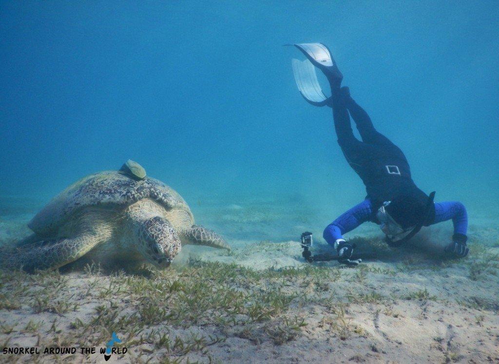 Marsa Mubarak - Turtle