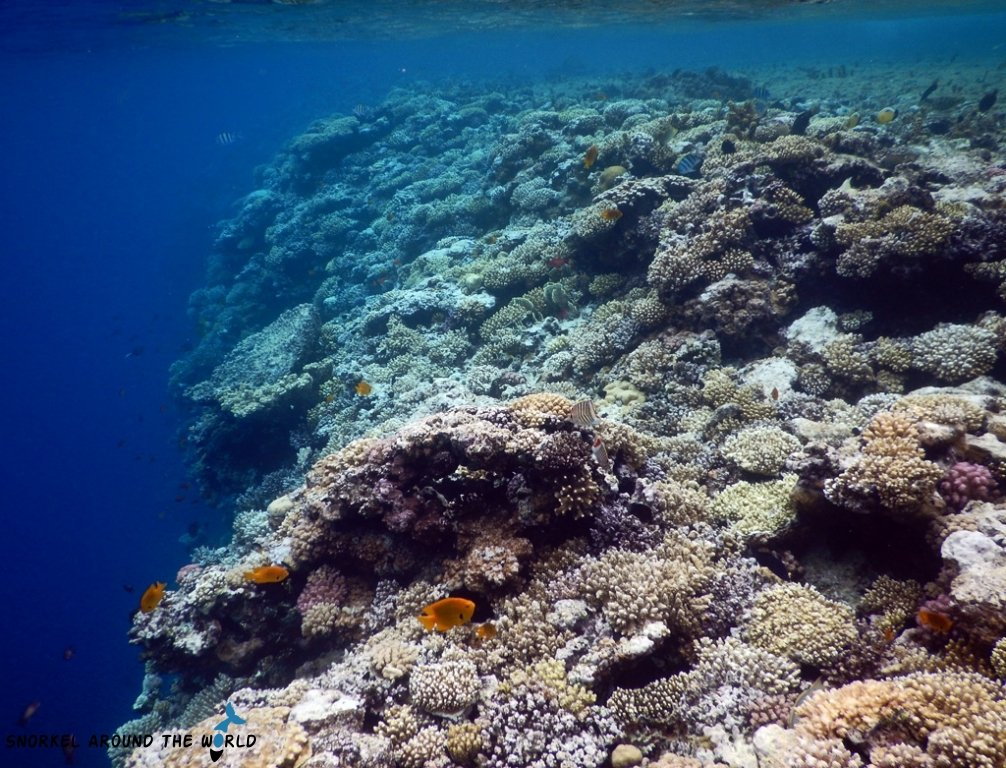 Protect the coral reef - Red Sea