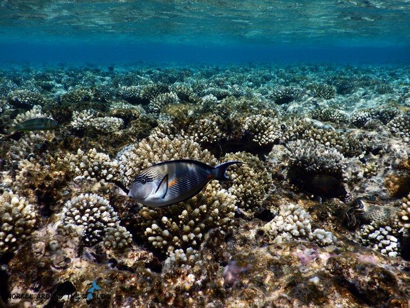 Ras Bob - Coral garden