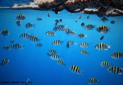 Ras Bob - Million fish