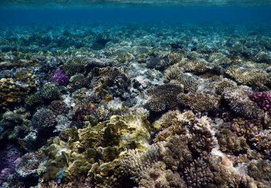 Ras Bob Reef