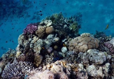 Ras Bob - Sharm el Sheikh Coral