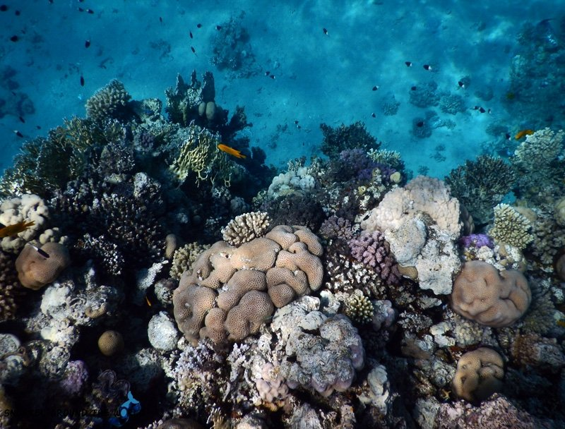 Coralgarden - Ras Bob Sharm el Sheikh