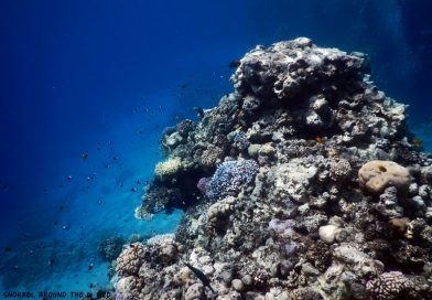 Ras Bob Sharm el Sheikh Reef