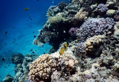 Sharm el Sheikh - Reeflife