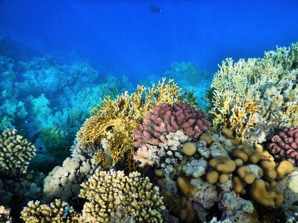 Ras um Sid coral reef