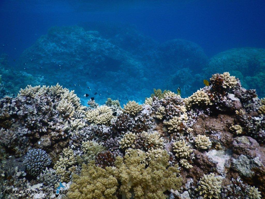 Ras Abu Galum Protected Marine Park