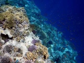 Red Sea Ras Ghamila - Million fish