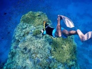 Red Sea Sharm el Sheikh snorkeling trip