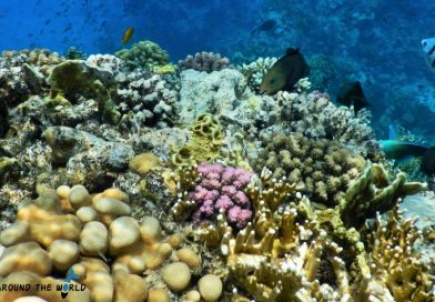 Red Sea best coral reefs