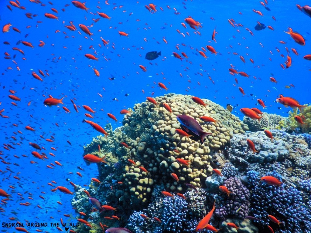 Red Sea snorkelling trip