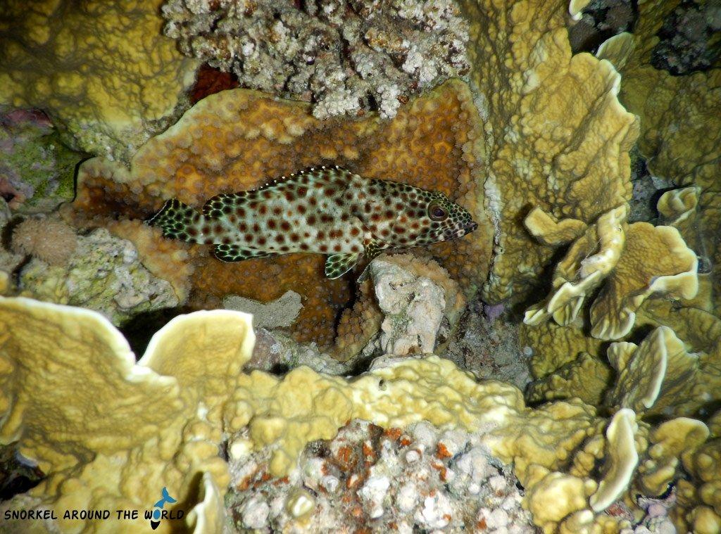 Red Sea marine life Egypt
