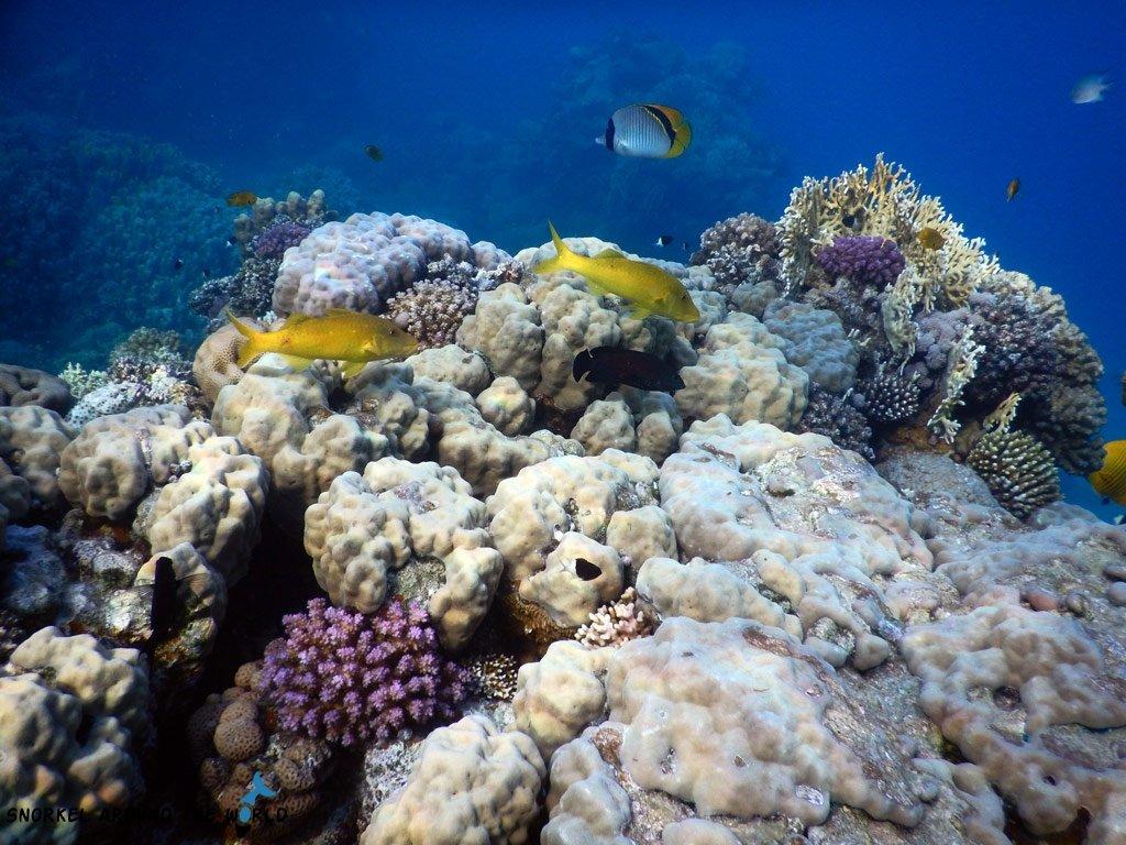 Red Sea sea temperature