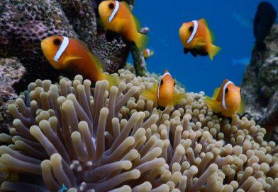 Reeflife - Biyadhoo
