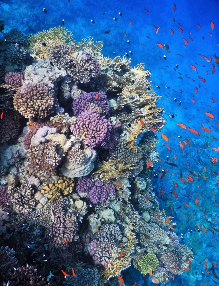 Save the corals Egypt
